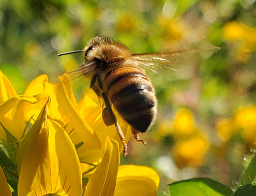 Helping Bees in All Seasons: Autumn