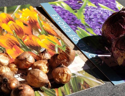 Autumn Bulb Container Planting