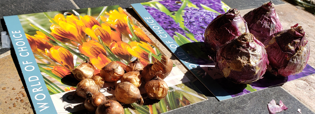 Planting Autumn Bulbs featured image